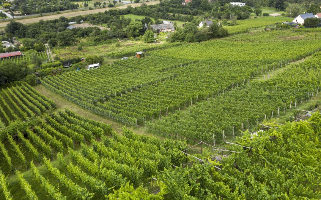 Tag des offenen Weingutes 28.08 – 29.08.2021